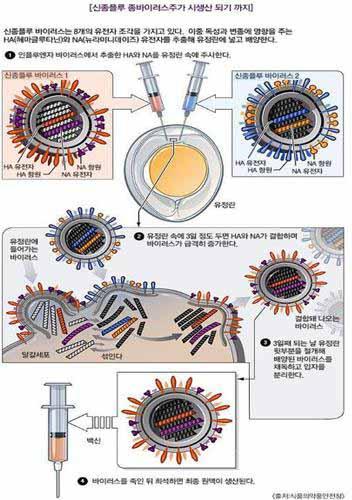 Image result for [이동훈 원장의 재미있는 의학이야기]  계란으로 만들어진 독감 백신